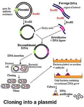 plasmid-technology